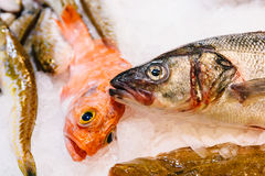 Fresh Fishes And Seafood On Ice In Market. Fresh Fishes And Seafood On Ice In Fish Market Stock Images