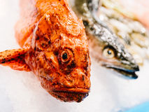 Fresh Fishes And Seafood On Ice In Market Stock Photo