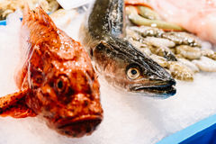 Fresh Fishes And Seafood On Ice In Market Stock Photography