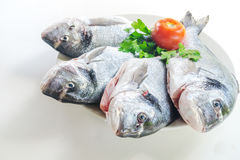 Fresh fishes with vegetables Royalty Free Stock Images