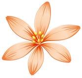 A fresh five-petal orange flower Stock Image