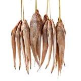 Fresh flathead fish Stock Photos