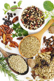 Fresh flavoring herbs and spices on white Stock Images