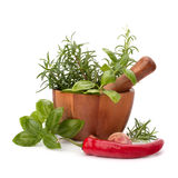 Fresh flavoring herbs and spices in wooden mortar Stock Image