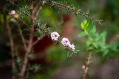Fresh floral background of small white, pink and fuchsia flowers stock images