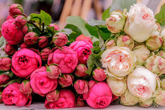 Fresh floral market, floral background Royalty Free Stock Photos