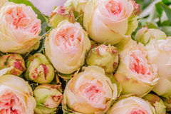 Fresh floral market, floral background Stock Images