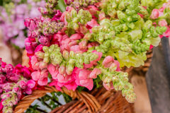 Fresh floral market, floral background Stock Photos