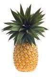 Fresh Florida pineapple isolated on white stock image