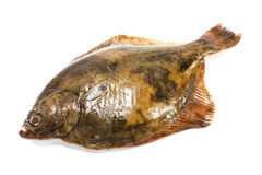 Fresh flounder on white background Royalty Free Stock Images