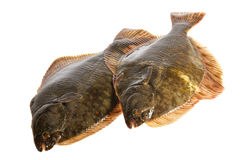 Fresh flounders. Stock Images