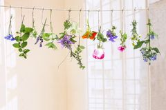 Fresh flovouring herbs and eatable flowers hanging on a string, in front of a white backgroung stock photography