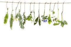 Fresh flovouring and medicinal plants and herbs hanging on a string, in front of a white backgroung Stock Photography