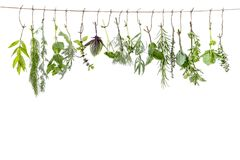 Fresh flovouring and medicinal plants and herbs hanging on a string, in front of a white backgroung. Fresh flovouring and medicinal plants and herbs hanging on a stock image