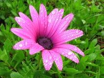 Fresh flower Royalty Free Stock Photography