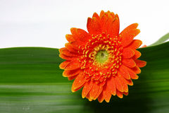 Fresh flower Stock Photo