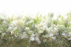 Fresh Flower Arrangement tunnel Stock Photos