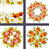 Fresh flower background Royalty Free Stock Image