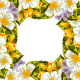 Fresh flower background Royalty Free Stock Photo