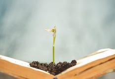 Fresh flower in book Stock Photo