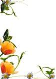 Fresh flower border Stock Photography