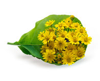 Fresh flower bouquet yellow in leaf top view on white background Stock Photo