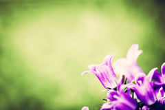 Fresh flower close-up on grass natural background. Stock Images