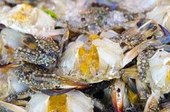 Fresh Flower crab. Flower crab, Blue crab, Blue swimmer crab, Blue manna crab, Sand crab, Portunus pelagicus, Portunus Stock Photo