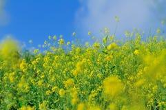 Fresh flower field Stock Image