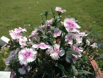 Fresh flower in gardan. White flower greens Royalty Free Stock Photos