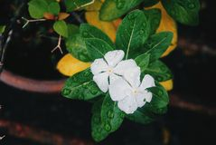 Fresh flower in the morning Stock Photos