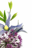 Fresh flower with pencil contour Royalty Free Stock Image