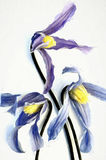 Fresh flower pencil drawing Royalty Free Stock Photo