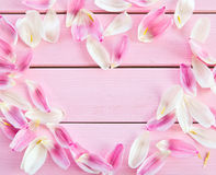Fresh flower petals on pink Royalty Free Stock Photo