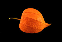 Fresh flower of physalis. Isolated on black background Stock Images