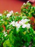 Fresh flower Stock Photography
