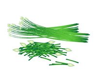Fresh Flowering Garlic Chives on White Background. Vegetable and Herb, Vector Illustration of Chopped Garlic Chives wiht Fresh Chinese Garlic Chives or Ku Chai Stock Photo