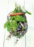 Fresh Flowering sage Royalty Free Stock Photos