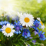 Fresh flowers. Fresh field flowers bouquet on the blue sky background Royalty Free Stock Photos