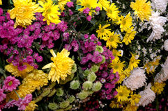 Fresh flowers. Series of colorful fresh flowers Stock Photos