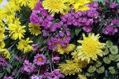 Fresh flowers stock photos