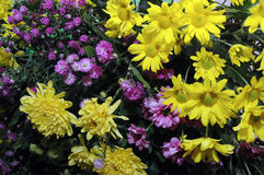 Fresh flowers stock images