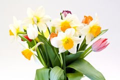 fresh flowers Royalty Free Stock Photo