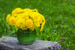 Fresh flowers dandelions in small green vase against spring grass Royalty Free Stock Photos
