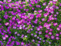 Fresh flowers decorated on vertical wall Stock Images