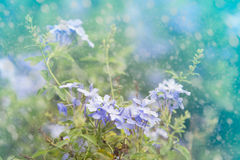 Fresh flowers with dreamy background Royalty Free Stock Photos