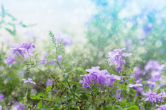 Fresh flowers with dreamy background Stock Photos