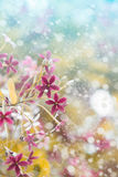 Fresh flowers with dreamy background Stock Photo