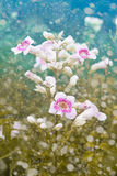 Fresh flowers with dreamy background Royalty Free Stock Image