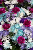 Fresh flowers. From flower market in thailand Stock Image